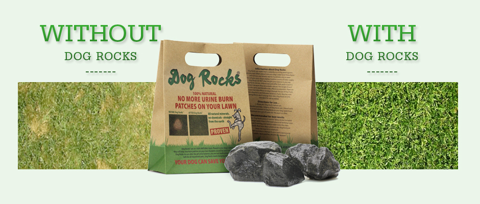 Dog Water Rocks To Stop Lawn Burn